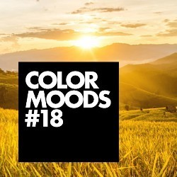 COLOR MOODS vol vloerinspiratie