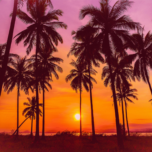 RED SUNSET PALMS NO.11
